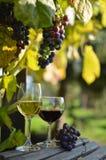 Ein Glas weißer Wein Eine Flasche Wein Vinnic Reifer Traubenwein Dunkelrote Trauben Weinberg In den Flanken gibt es einen Kognak lizenzfreies stockbild