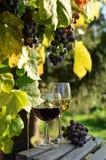 Ein Glas weißer Wein Eine Flasche Wein Vinnic Reifer Traubenwein Dunkelrote Trauben Weinberg In den Flanken gibt es einen Kognak lizenzfreie stockfotografie