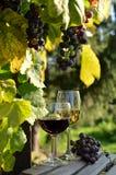 Ein Glas weißer Wein Eine Flasche Wein Vinnic Reifer Traubenwein Dunkelrote Trauben Weinberg In den Flanken gibt es einen Kognak stockfotografie