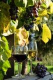 Ein Glas weißer Wein Eine Flasche Wein Vinnic Reifer Traubenwein Dunkelrote Trauben Weinberg In den Flanken gibt es einen Kognak stockbilder