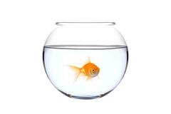 Ein goldener Fisch in einer Schüssel Stockbilder