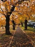 Ein goldener Gehweg des Herbstbaums Lizenzfreie Stockfotos
