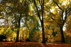 Ein goldener Herbst stockfoto