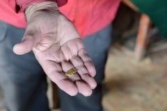 Ein Goldnugget wurde am Bergwerk in Tierra del Fuego gefunden Lizenzfreie Stockfotos