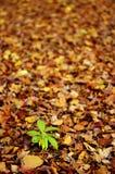 Ein Grün im Herbst Stockfoto