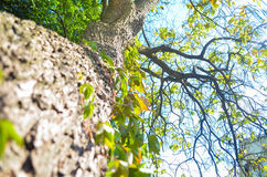 Ein grüner Baum Stockbild