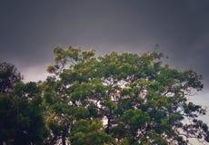 Ein grüner Baum mit stürmischem Himmelhintergrund lizenzfreie stockbilder