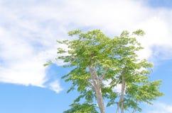 Ein grüner Baum unter dem super grünen Himmel Stockfoto