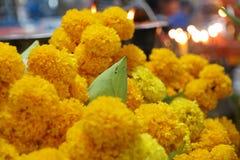 Ein grüner Lotos umgeben durch viele gelben Blumen Stockbilder