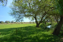 Ein grüner Pfad entlang dem Ciane Fluss Stockfotos