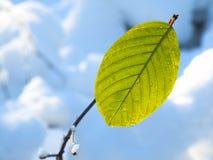 Ein grünes Blatt Stockfotos