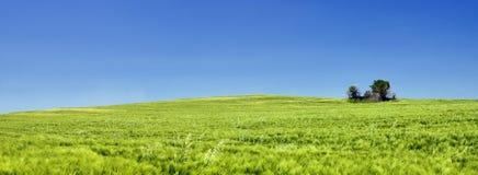 Ein grünes Feld lizenzfreie stockfotografie