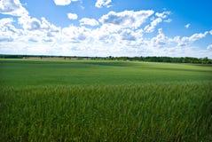 Ein grünes Feld im Inneren von Amerika Stockfotografie