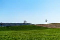 Ein grünes Feld im Vorfrühling Stockfoto