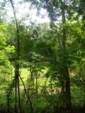 Ein grünes Land Lizenzfreie Stockbilder