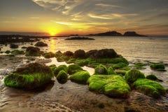 Ein grünes Meer Stockfoto
