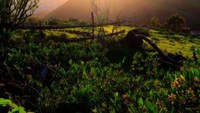 Ein grünes Tal auf einem Hügel im Sonnenuntergang stock video
