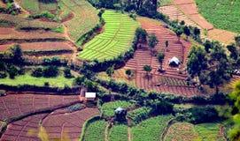 Ein grünliches Bauernhof aera von Bergkuppe vattavada Lizenzfreie Stockfotografie