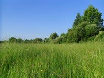 Ein Gras ist auf dem Gebiet stockbild