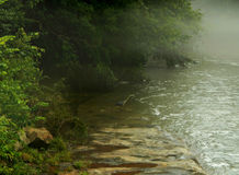 Ein Graureiher im Nebel Stockbilder
