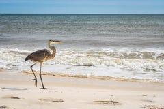 Ein Graureiher im Perdido-Hauptstaat-Park, Florida lizenzfreie stockfotos