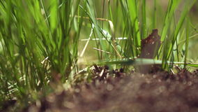 Ein großer Ameisenhaufen in der Natur stock video