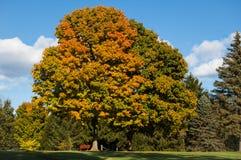 Ein großer Baum Lizenzfreies Stockfoto