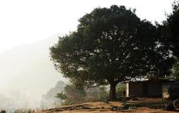 Ein großer Baum stockbilder