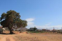 Ein großer Baum Stockfoto