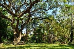 Ein großer Baum in einem forrest Lizenzfreie Stockfotografie