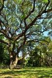Ein großer Baum in einem forrest Stockbilder