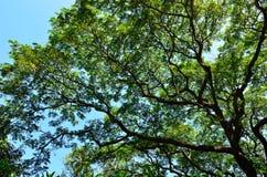 Ein großer Baum in einem forrest Stockfotos