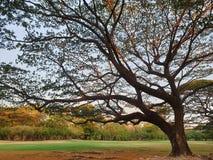 Ein großer Baum lizenzfreie stockfotografie