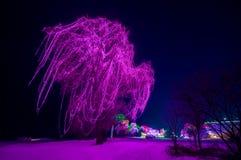 Ein großer Baum verziert mit purpurroten Lichtern stockbild
