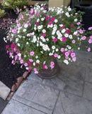 Ein großer Eimer Blumen Lizenzfreie Stockfotos