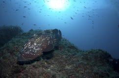 Ein großer Fisch kommt auf den Felsen heraus Lizenzfreie Stockfotografie