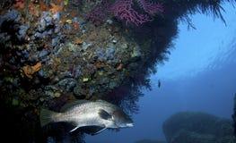 Ein großer Fisch kommt auf den Felsen heraus Stockfoto
