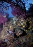 Ein großer Fisch kommt auf den Felsen heraus Stockbilder