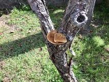 Ein großer Pilz auf einem Baum lizenzfreies stockbild