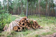 Ein großer Stapel des Holzes in einem Waldweg Stockbild