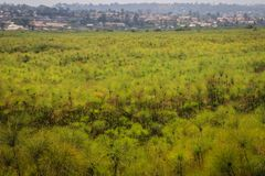 Ein großes Feld von grünen Papyrus- und Dorfhäusern lizenzfreies stockfoto