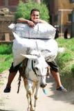 Ein ägyptischer Landwirt, der einen Esel auf den Bauernhof in Ägypten reitet Lizenzfreies Stockfoto