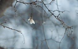 Ein hängen lizenzfreies stockbild