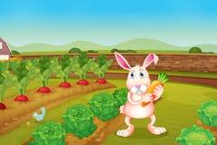 Ein Häschen, das eine Karotte entlang dem Garten hält Lizenzfreie Stockbilder