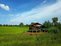 Ein Häuschen auf dem Reisgebiet Stockbild