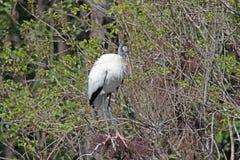 Ein hölzerner Storch in einem Baum Lizenzfreie Stockfotografie