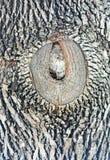Ein hölzernes Korn auf dem großen Baum, sehr künstlerisch stockfoto
