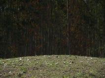 Ein Hügel am chinesischen Grab Stockfotos