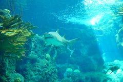 Ein Haifisch schwimmt stockbilder