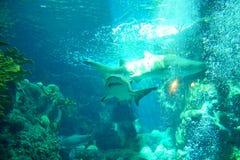 Ein Haifisch schwimmt lizenzfreie stockbilder